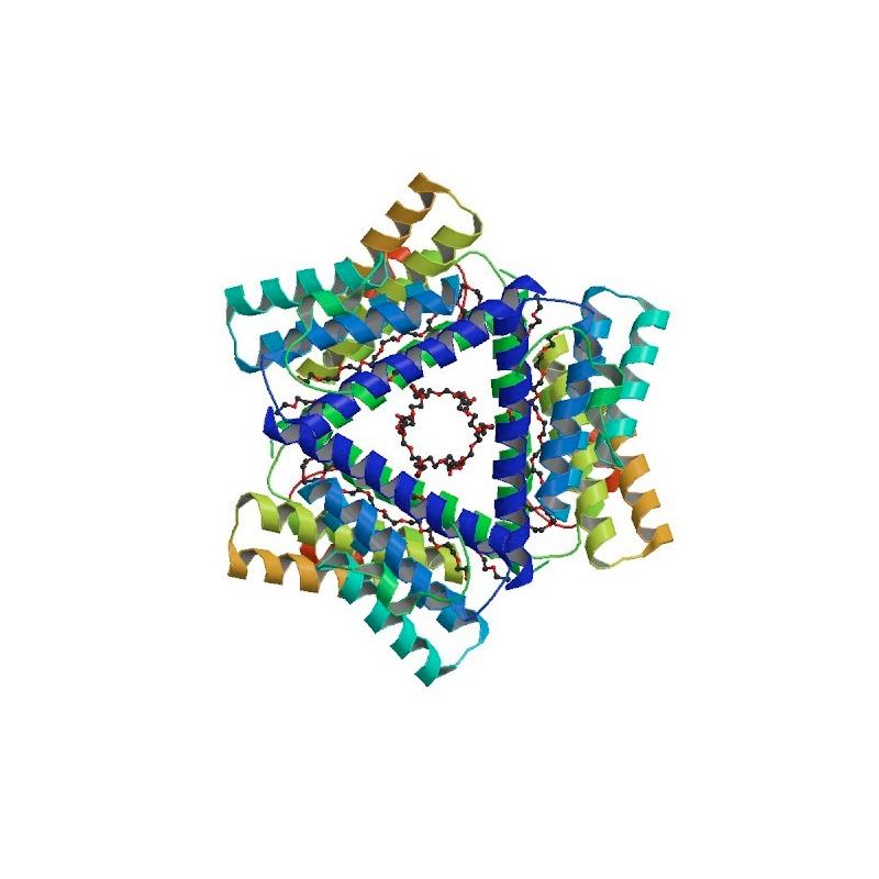 Antibody to Anti-Serum Amyloid A (SAA)