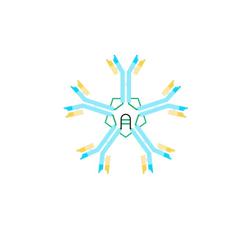 Anti Human IgM Antibody