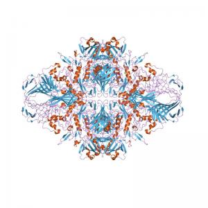 Alpha Complementation Kit Beta-galactosidase
