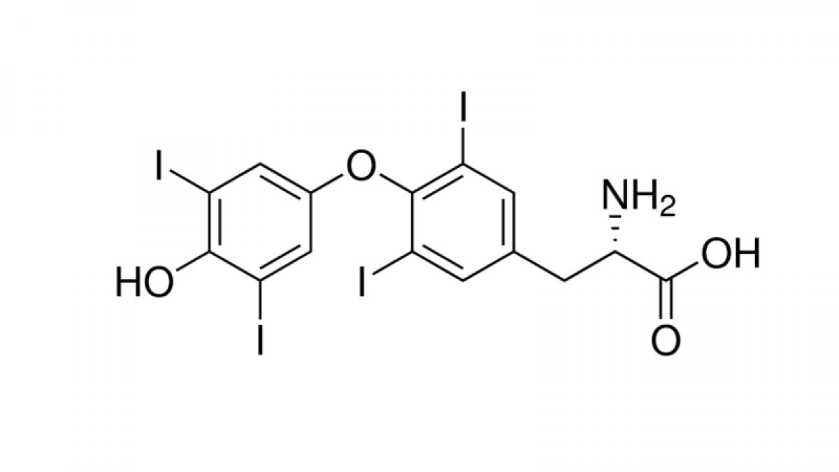 Antibody To Thyroxine T4 Monoclonal Molecular Depot