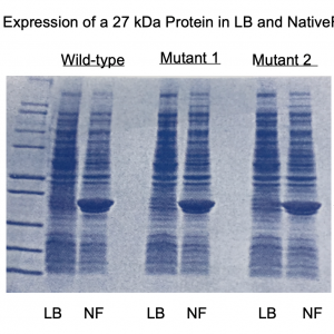 NativeFolder Bacterial Culture Medium
