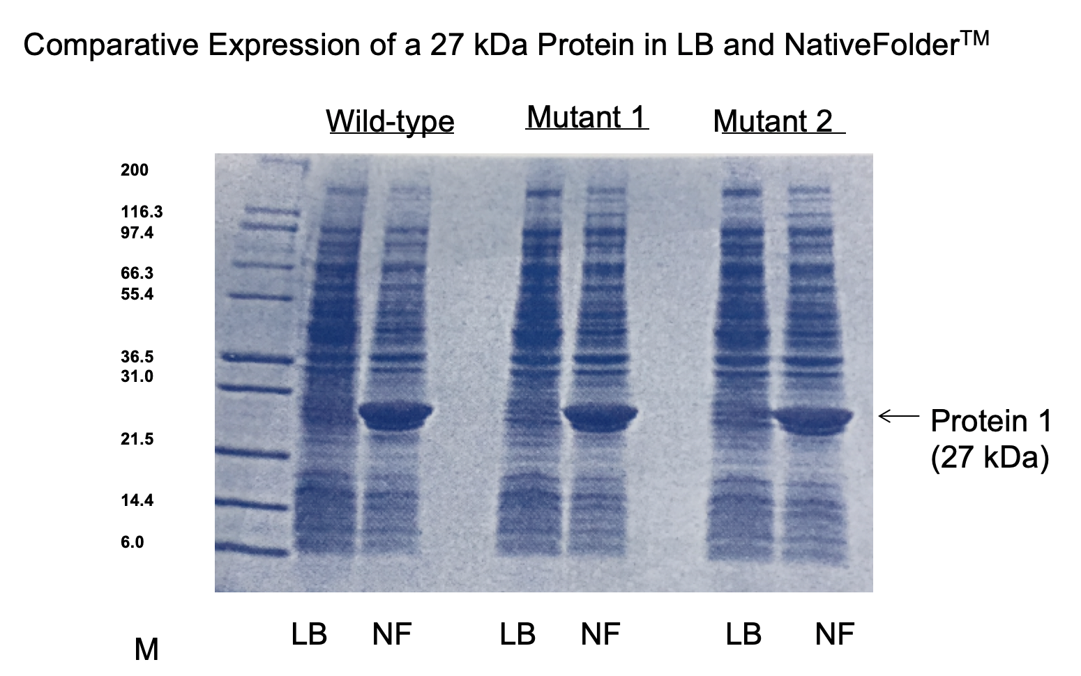 Nativefolder Expression of Soluble Proteins