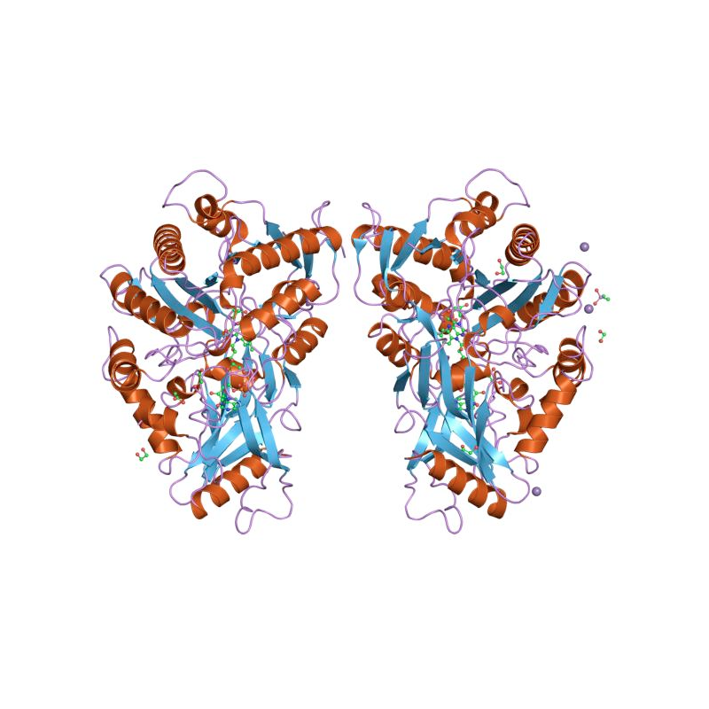 Cholesterol Oxidase from Streptomyces sp.