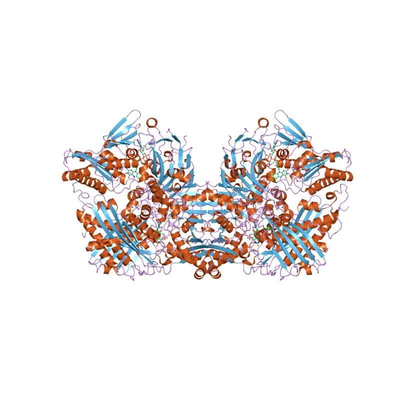 Xanthine Oxidase Grade II