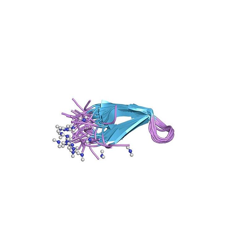 Human Erythropoietin Protein (EPO)