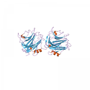 SAA Antibody Polyclonal (Serum Amyloid Protein A1)