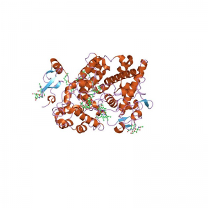 MPO Antibody Monoclonal (Mouse)