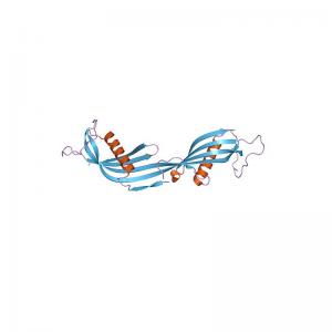 Cystatin C Antibody Monoclonal