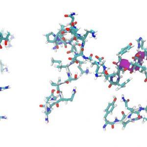 Adrenomedullin 2 / Intermedin (Rat)