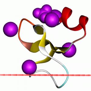β-Defensin-1 (Mouse)