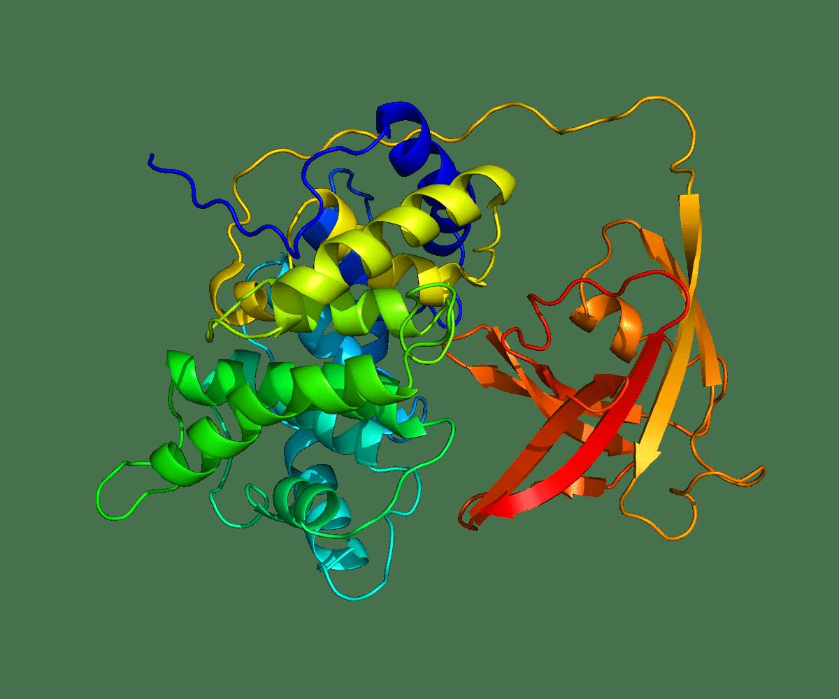 Intrinsic Factor Monoclonal Antibody