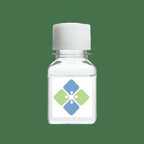 Human Epidermal Growth Factor Receptor
