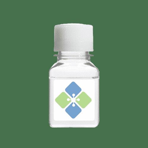 Nephrin Antibody (Human Polyclonal)