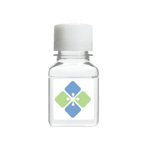 Lactic Dehydrogenase (E. coli)
